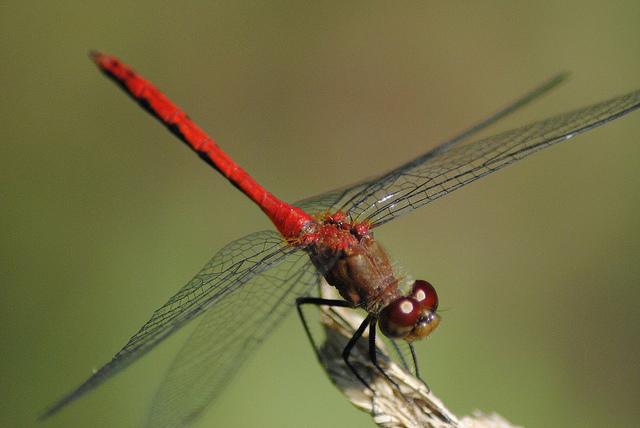 WKSU News: Exploradio - Dragons and Damsels