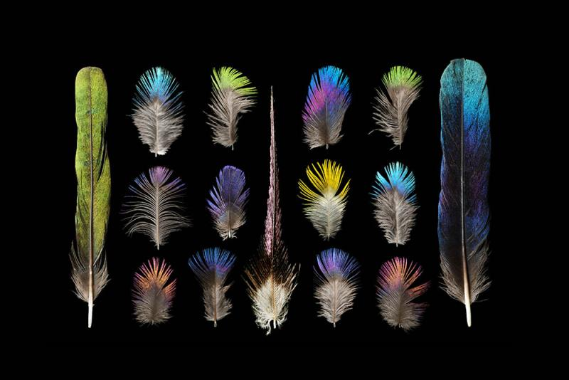 Different bird feathers - photo#18