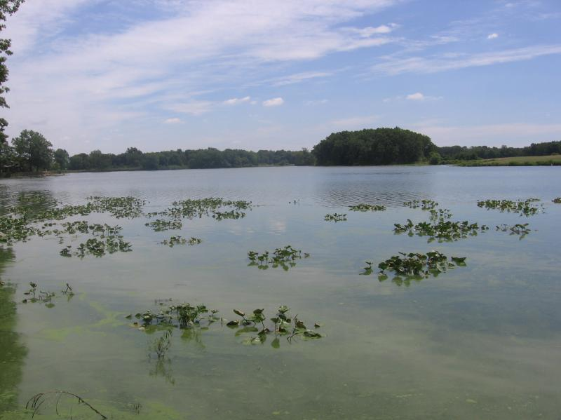 Algae growth in Wingfoot Lake in Portage County